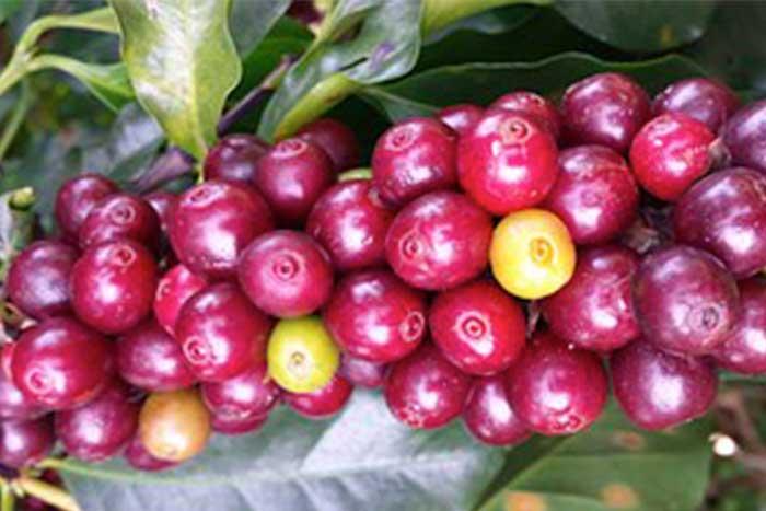 coffee-wholesale-ireland